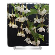 Snowbell Tree Shower Curtain