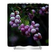 Snowberry 5191 H_2 Shower Curtain