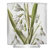 Snowdrop And Snowflake Shower Curtain