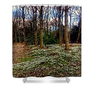 Snowdrop Woods 2 Shower Curtain