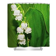 May-lily Shower Curtain