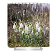 Snowdrops In The Garden Of Spring Rain 3 Shower Curtain