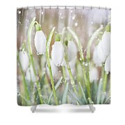 Snowdrops In The Garden Of Spring Rain 4 Shower Curtain