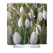 Snowdrops In The Garden Of Spring Rain 5 Shower Curtain