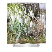 Snowdrops In The Garden Of Spring Rain 7 Shower Curtain