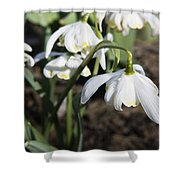 Snowdrops Shower Curtain