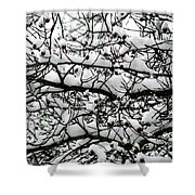 Snowfall On Branches Shower Curtain