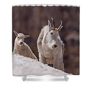 Snowfield Shower Curtain