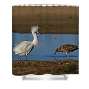 Snowy And The Gull Shower Curtain
