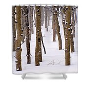 Snowy Aspen Shower Curtain