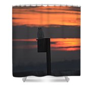 Snowy At Sunset Shower Curtain