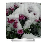 Snowy Chrysanthemums Shower Curtain