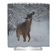 Snowy Doe Shower Curtain