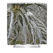 Snowy Egret - Egretta Thula - On Marsh Tangle Shower Curtain
