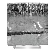 Snowy Egret - 1 Shower Curtain