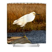 Snowy Egret 1 Shower Curtain
