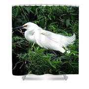 Snowy Egret 12 Shower Curtain