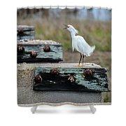 Snowy Egret #2 Shower Curtain