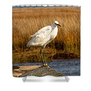 Snowy Egret 3 Shower Curtain