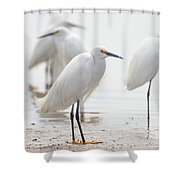 Snowy Egret And Friends Shower Curtain