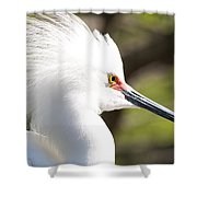 Snowy Egret Closeup Shower Curtain