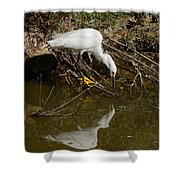 Snowy Egret Fishing From Branches Shower Curtain