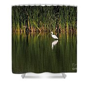 Snowy Egret In Marsh Reinterpreted Shower Curtain