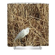 Snowy Egret In Tall Grasses Shower Curtain