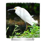Snowy Egret In The Everglades Shower Curtain