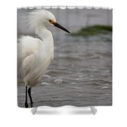 Snowy Egret In The Wind Shower Curtain