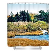Snowy Egret-island Beach State Park N.j. Shower Curtain