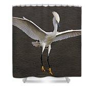 Snowy Egret Landing Shower Curtain