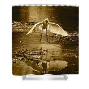Snowy Egret Landing With Golden Tones Shower Curtain