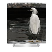Snowy Egret Looking For Next Meal Shower Curtain