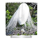 Snowy Egret Mom And Chick Shower Curtain