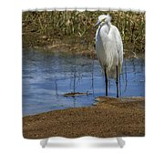 Snowy Egret Of Chincoteague No. 3 Shower Curtain