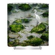 Snowy Egret On Mossy Rocks Shower Curtain