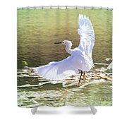 Snowy Egret Over Golden Pond Shower Curtain