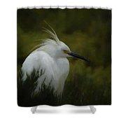 Snowy Egret Portrait Da Shower Curtain