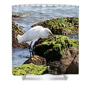 Snowy Egret  Series 2  1 Of 3  The Catch Shower Curtain