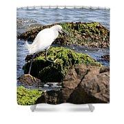 Snowy Egret  Series 2  3 Of 3  Adjusting Shower Curtain