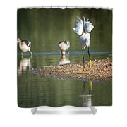 Snowy Egret Stretch 4280-080917-2cr Shower Curtain