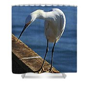 Snowy Egret That Minnow Will Be Fine Shower Curtain