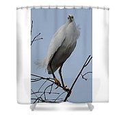 Snowy Egret  Watching Shower Curtain