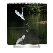 Snowy Egrets 080917-4290-1 Shower Curtain