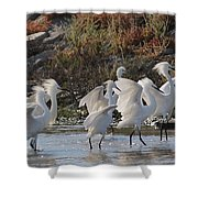 Snowy Egrets Shower Curtain