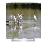 Snowy Egrets On Calm Water Shower Curtain