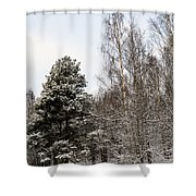 Snowy Forest Edge Shower Curtain
