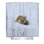 Snowy Fox Shower Curtain