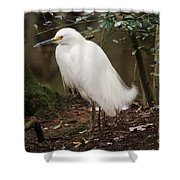 Snowy In The Marsh Shower Curtain